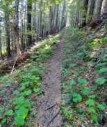 Ride smooth tread through forest. © Craig Romano