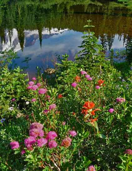 t_late-summer-flowers2