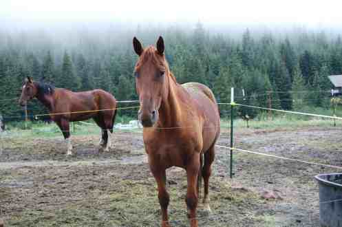 horses from Chinook Pass Outfitters © Heather Larson