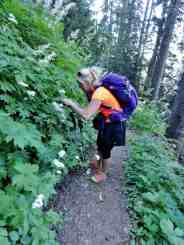 A hiker stops to admire woodland wildflowers © Craig Romano