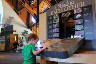 Exploring Exhibits at the Jackson Visitors Center © Carrie Uffindell
