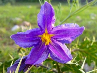 Soon Valley Wildflowers