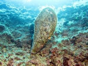snorkeling in Olbia
