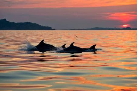 Tour with dolphin watching in Olbia and Golfo Aranci