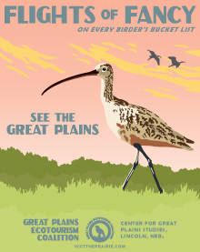 eco-curlew-poster