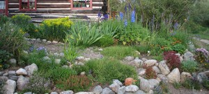 High altitude garden in Twin Lakes