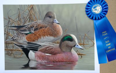 Artists Sought for 2020 North Carolina Duck Stamp Competition