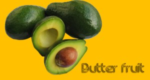 Butter fruit yercaud