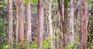 Teak Forest in Yercaud