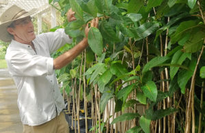 Dewey Hollister points out plants that survived Hurricane Maria. (Jamie Leonard photo)