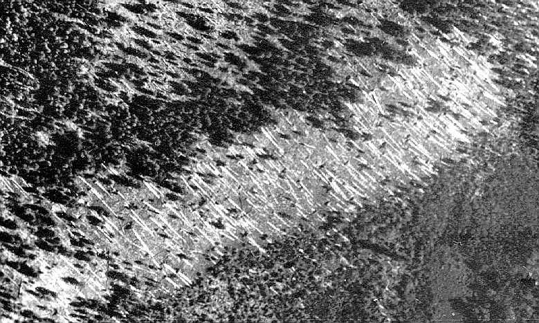 Tunguska (part of flattened area) taken in 1938