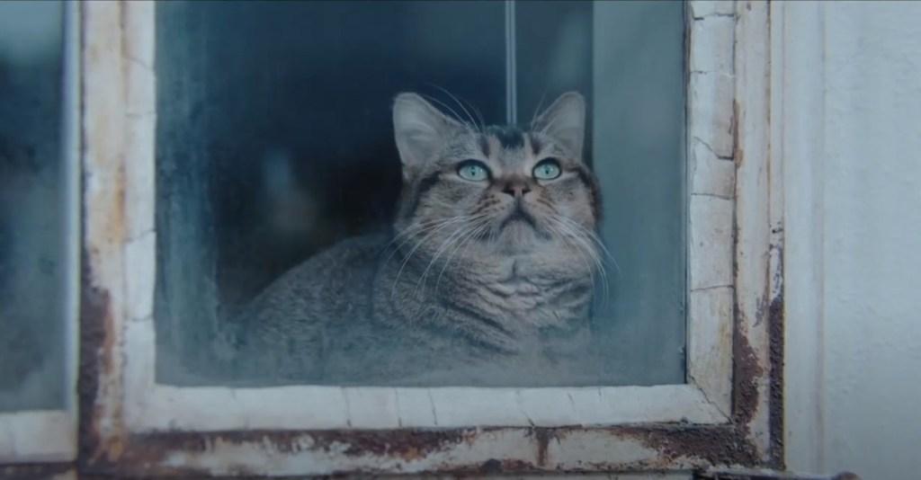 The Door into Summer 2021 movie - Pito the Cat (Petronius the Arbiter)