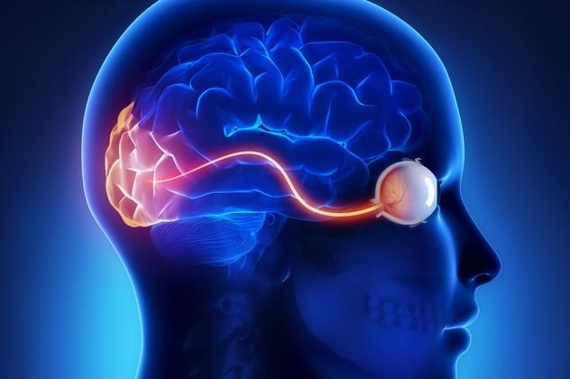 Image result for conexion del cerebro con la vista