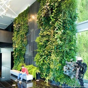 Green Walls, Vertical Gardens & Living Plant Systems green walls