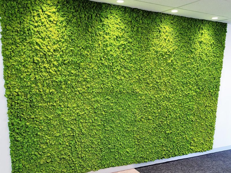 Troy White Group - Kedron Moss Wall