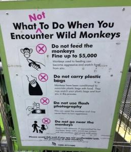 Monkey Singapore Sign