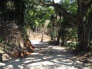 Lot Entry - Naranjo