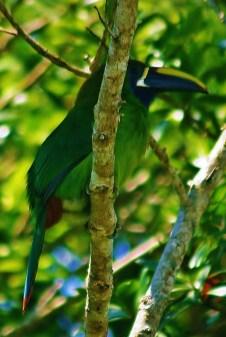 more than 100 species of birds seen at Vista Valverde