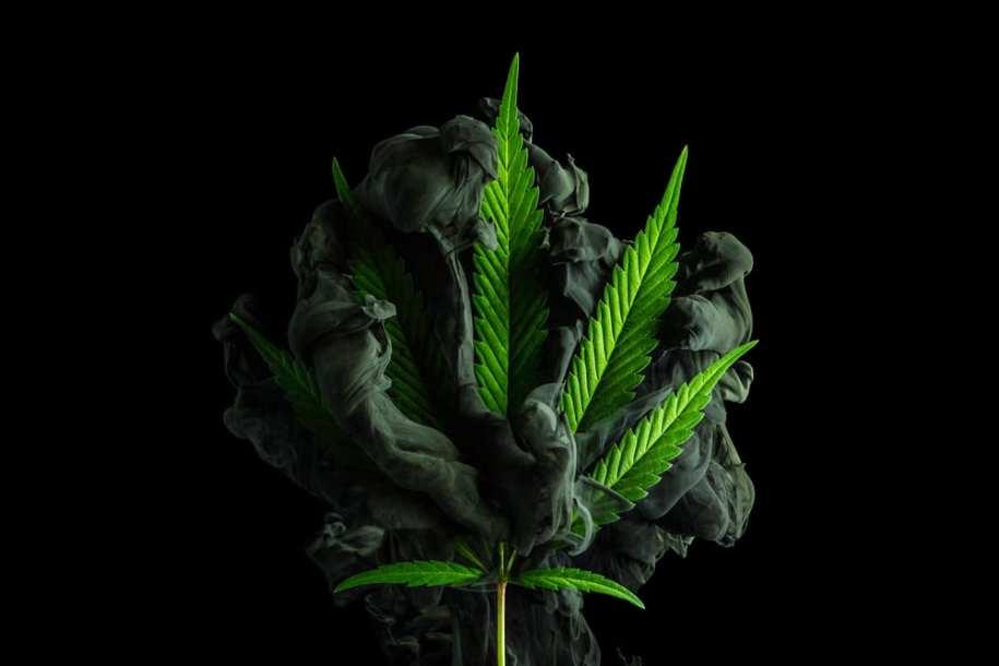 CBD Cannabis Branding Graphic Design