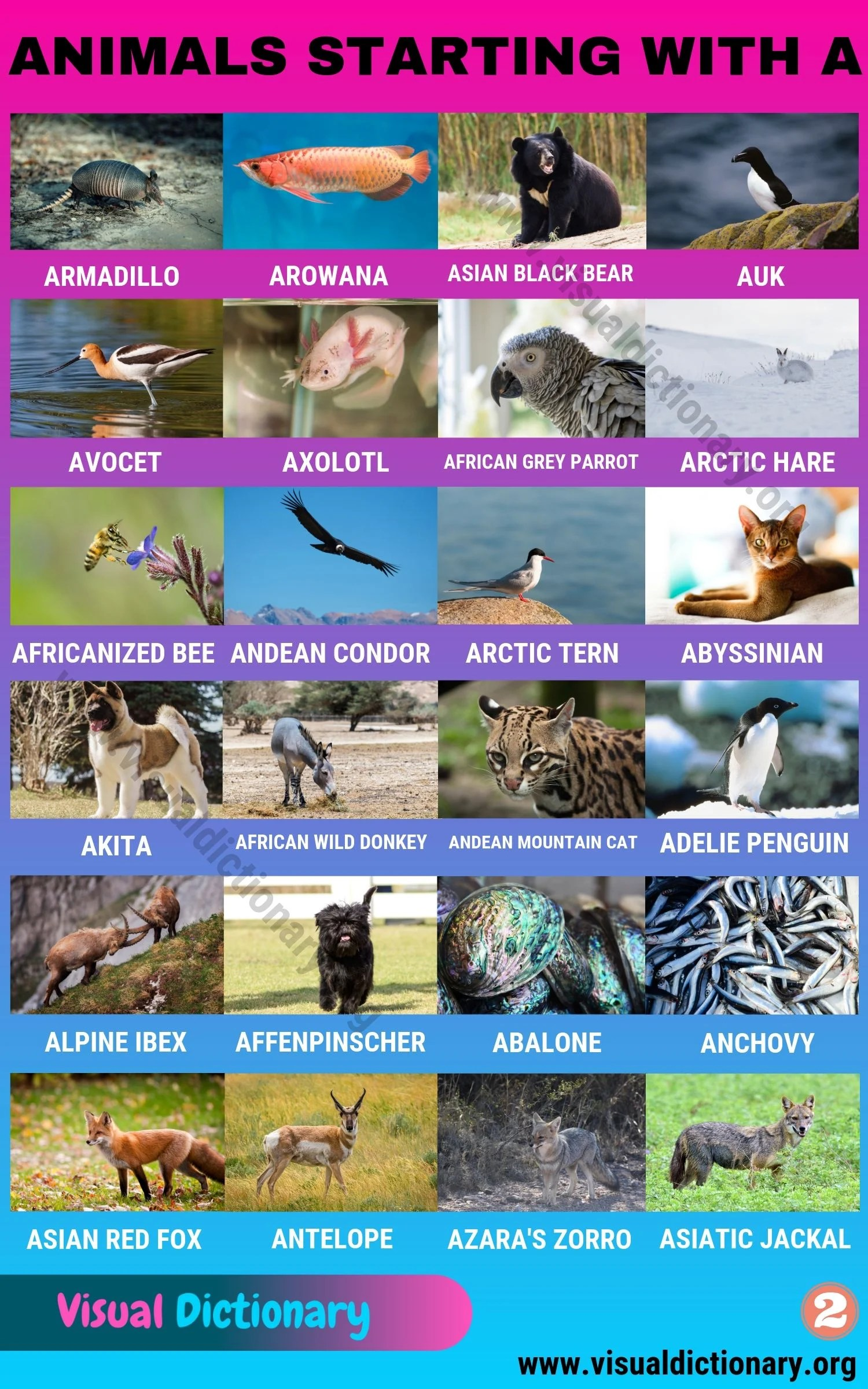 Animals That Start With A Useful List Of 45 Animals Starting With A Visual Dictionary