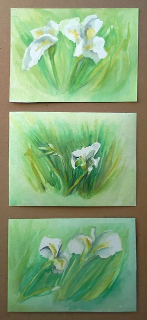 4 by 6 inch cards I painted of White Iris Flowers