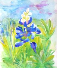 Texas Bluebonnets - Little Lupines