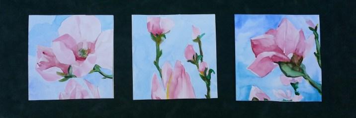 pink magnolia blossoms