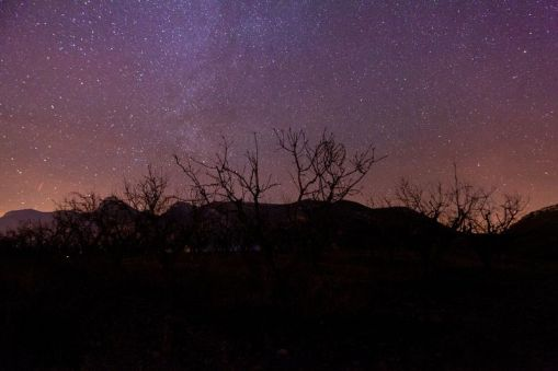 noche-de-estrellas-almendros-echando-raices-a-la-via-lactea-by-raul-catalinas-4