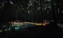 Bruce-Munro-Lights15