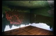 jn05rhododendroninroom-edit