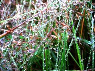 dew, Norway