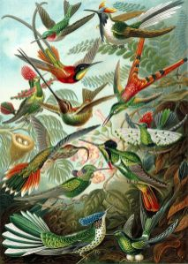Hummingbird (Trochilidae)