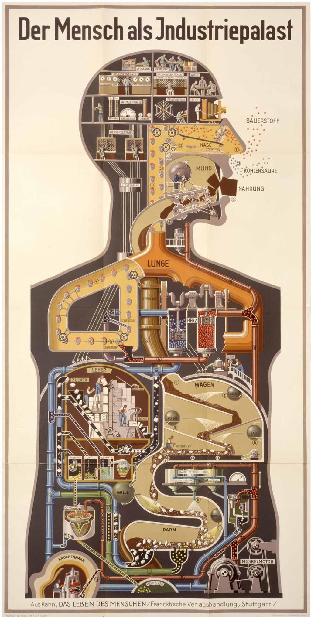 Fritz Kahn: the human as industrial palace