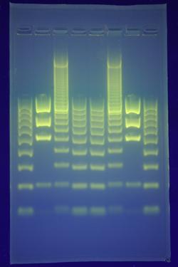 Source: Biotech Spain (Technique description)