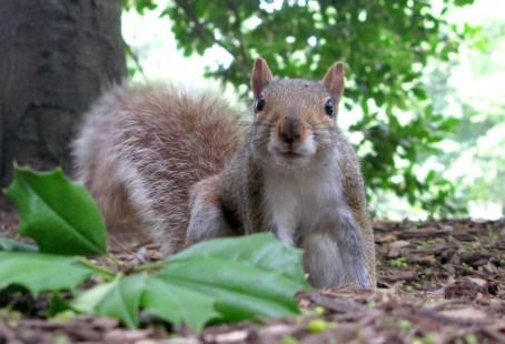 fat happy squirrel