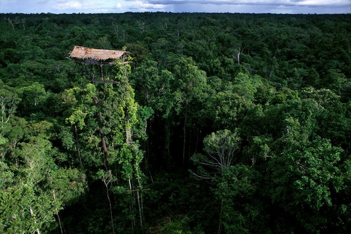 The tree house dwellers of Papua