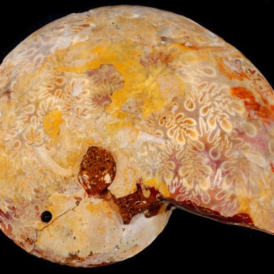 Reverse side of agatizied ammonite - Flickr Commons, User: Captain Tenneal. http://tinyurl.com/z4tvntf