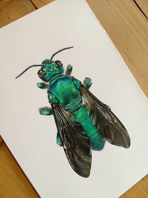 Fly, Carim Nahaboo