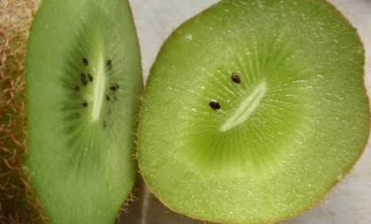 The spirit of the green blob speaks to you from a kiwi