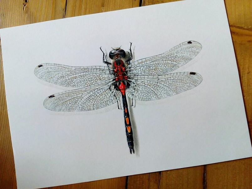 Dragonfly, Carim Nahaboo