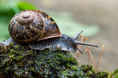 Mark Setton Snail