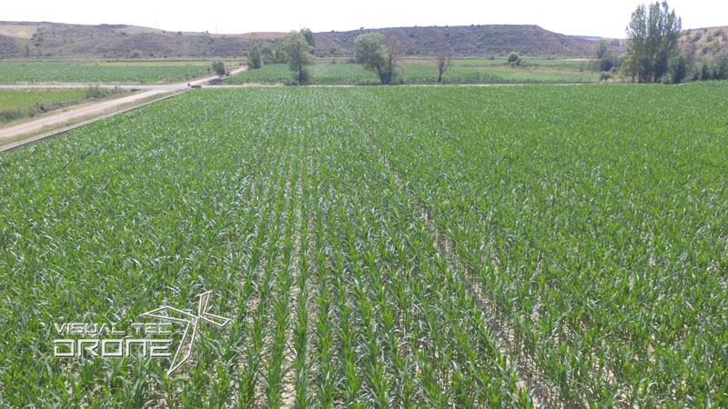 Agricultura de precisión cultivos con drone