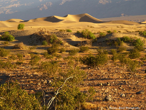 Photo: Death Valley Sand Dunes in the early morning light | Marsha J Black