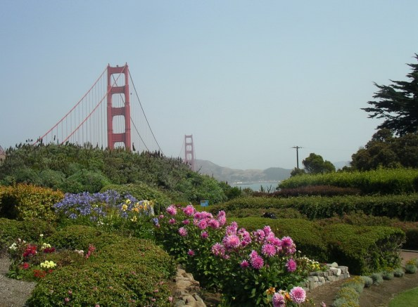 Flowers by the Golden Gate Bridge-San Francisco   Marsha J Black