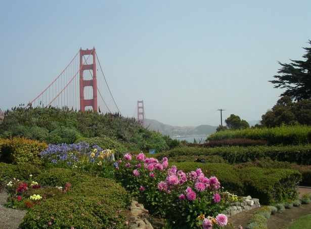 Flowers by the Golden Gate Bridge-San Francisco | Marsha J Black