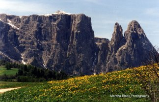Alpi di Suissi, Mt. Schlern in the Italian Alps during Fall with grass and yellow wildflowers in front | Marsha J Black