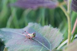 Friendly cricket