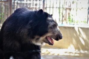 VIT destinó alimentos para las especies en peligro de extinción del Zoológico de Paraguaná