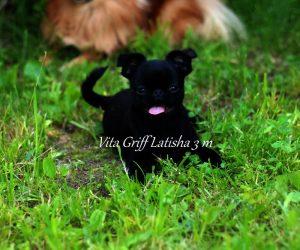 брабансон черный