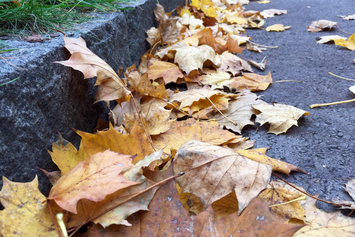 Mit dem Herbst kommen die ersten Erkältungen. Hier ist mangelnde Gesundheit schnell zu spüren.
